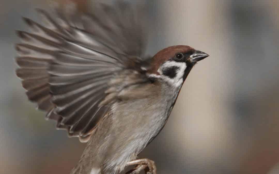Les oiseaux du jardin (2/2)
